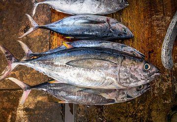Fresh Tuna sur Ruurd Dankloff