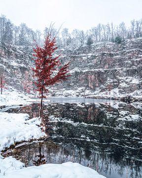 Einsam im Winter von Joris Machholz