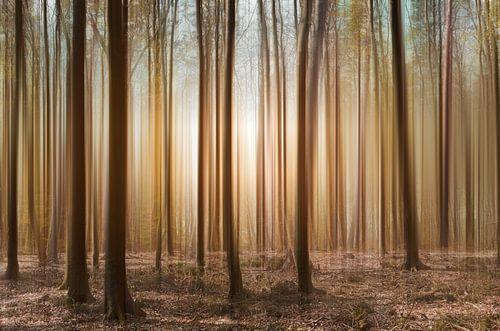 Im Wald von Violetta Honkisz