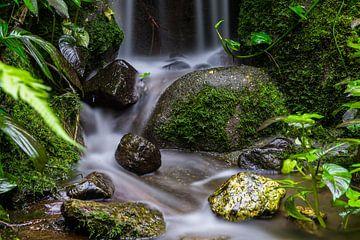 Dschungel-Vibes von Jeffrey Hol