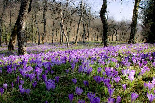 Beautiful flowers van René Pronk