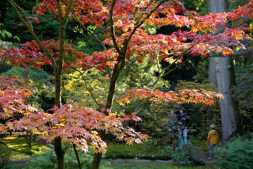 Japanse tuin van Henk Alblas