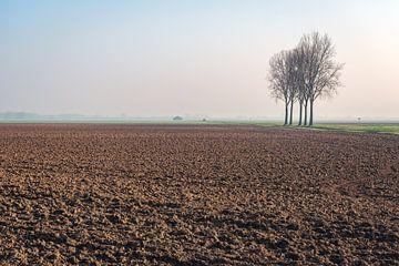 Kürzlich kultiviertes Feld mit fünf kahlen Bäumen im Hintergrund. von Ruud Morijn