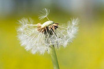 Wind bitte von Hans Goudriaan