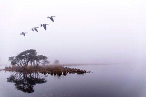 Vlucht in het oneindige. Strijbeek, Strijbeekse heide, Noord-Brabant, Holland, Nederland afbeelding  van