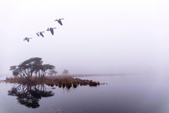 Vlucht in het oneindige. Strijbeek, Strijbeekse heide, Noord-Brabant, Holland, Nederlands landschap.  Het verhaal bij deze foto gaat naar het einde van het leven. De ganzen benadrukken de reis van het leven naar het onbekende. Het einde is in de nevel gehuld. Het lijnenspel van de bomen wordt weerspiegeld in het water. De mist is zo prominent aanwezig dat de spiegeling meer contrastrijk is als de bomen in de werkelijkheid. Elementen die bij het einde van ons menselijke leven ineens een belangrijke rol gaan spelen. Mystiek wordt het meest belangrijke onderdeel van dat moment. Afscheid terwijl het einde vervaagd in het niets, ook is het water zo helder is dat de details van de bodem nog zichtbaar zijn. De gebeurtenis is glashelder, het geheel gaat over in een absoluut ondoorzichtige mist. Alle moeite is genomen om nog kleur in de afbeelding te krijgen. Voor diegene die de moeite nemen is het allemaal te aanschouwen. afbeelding mist afbeelding ganzen afbeelding bomen afbeelding eiland