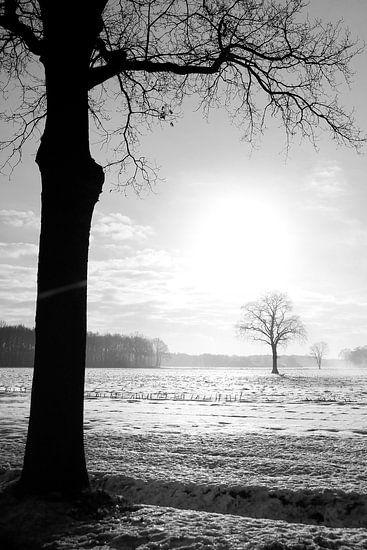 Boom in winters landschap