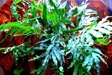 Kamerplant: Phlebodium Blue Star | Staalvaren 1-2 von MoArt (Maurice Heuts)