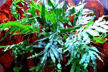 Kamerplant: Phlebodium Blue Star | Staalvaren 1-2 van MoArt (Maurice Heuts)