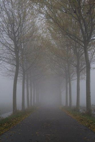 Eindeloos in de mist.