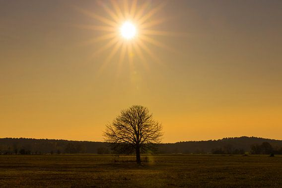 Een boom en de zon