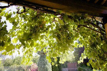 Druiven en zon van Veerle Van den Langenbergh