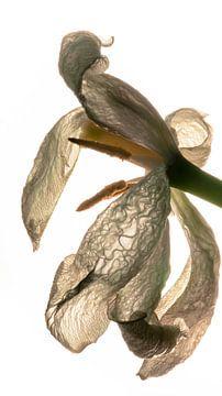 bloemblaadjes met structuur von mick agterberg