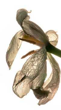 bloemblaadjes met structuur van mick agterberg