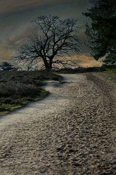 Promenade matinale sur Danny van Kolck