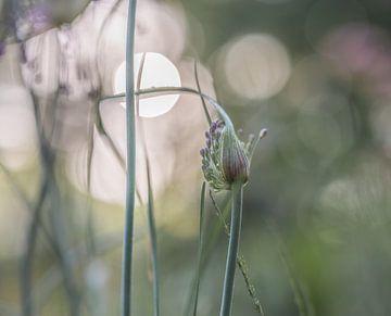 Blumen Teil 172