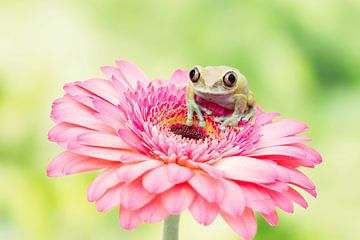 I feel pretty in pink von Joyce Beukenex