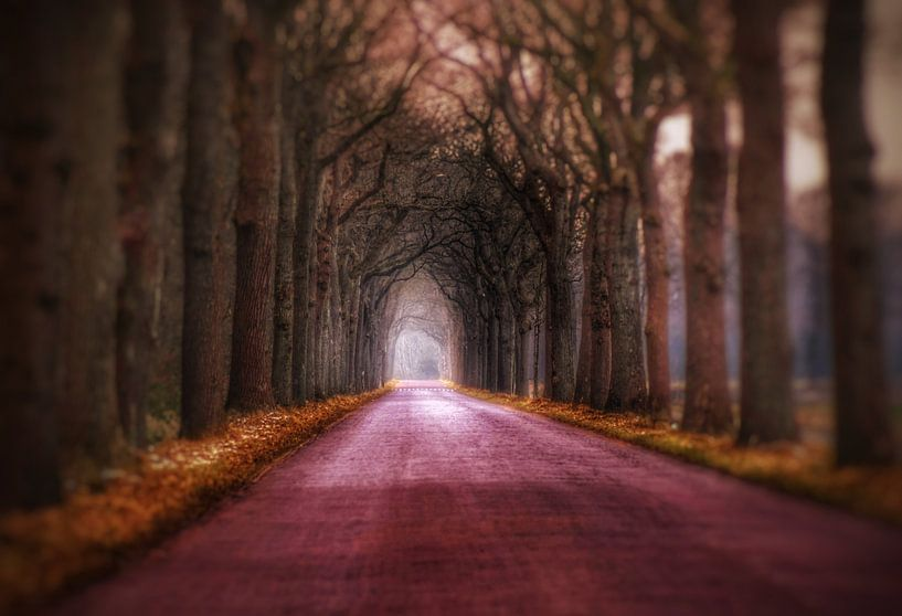Sprookjesachtige laan midden in de bossen. van Mariska Brouwenstijn