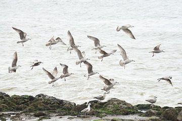 Seemöwen an der Küste von Blond Beeld