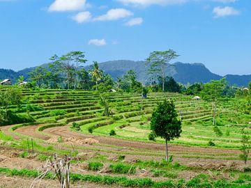 De rijstvelden in Bali van Petra Brouwer