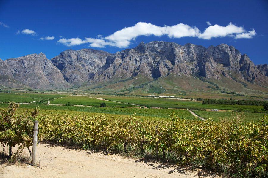 Uitzicht over wijnvelden in de Westkaap, Zuid-Afrika
