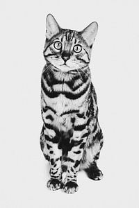 Fine-art portret Bengaalse kat in zwart wit