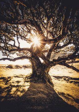 De baas van het laurierwoud van Joris Pannemans - Loris Photography