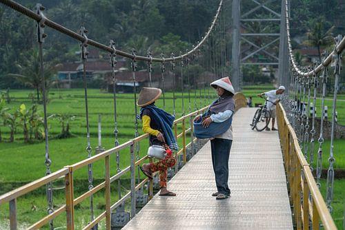 Chat sur le pont