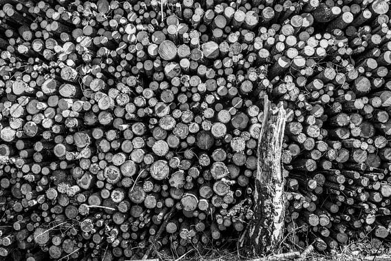 boomstammen van Peter v Mierlo