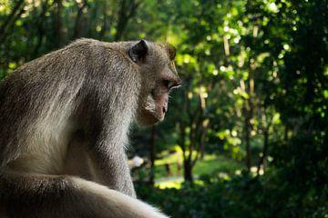 Balinese langstaartaap van Ludo Marrink
