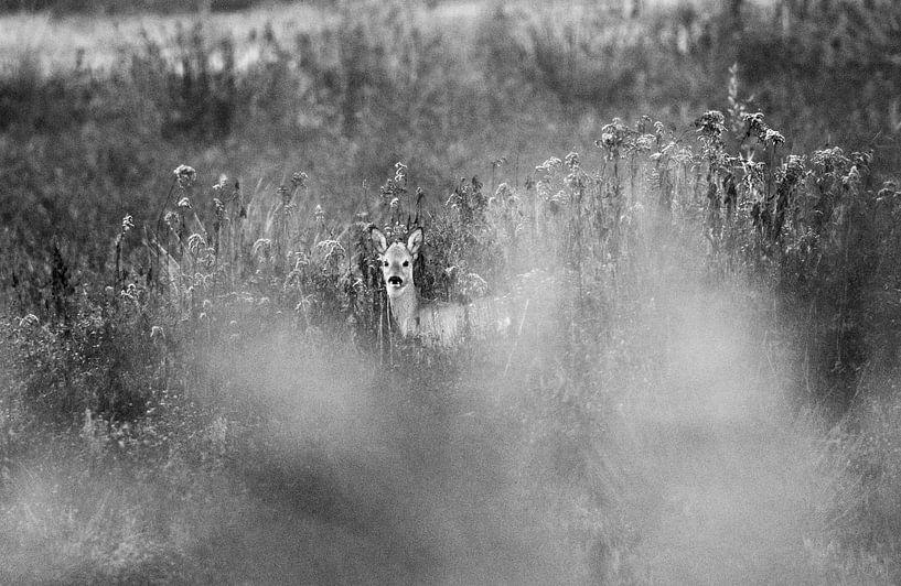 Ree in de Beningerslikken von Sven Zoeteman