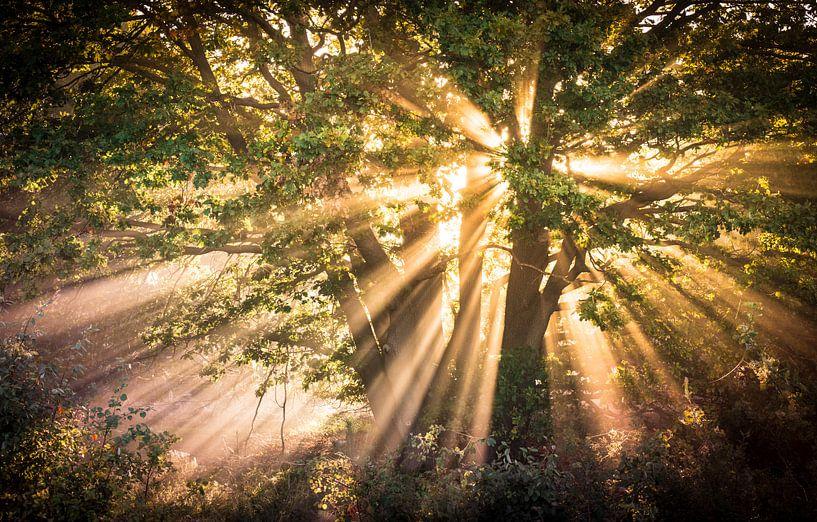 zonnestralen Sallandse heuvelrug van Martijn van Steenbergen