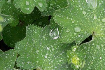 Regentropfen von Julien Willems Ettori