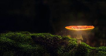paddenstoel von