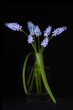 raisins bleus dans la lumière noire sur Klaartje Majoor