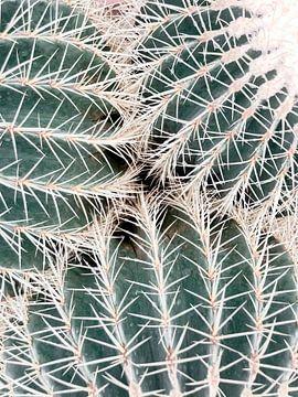 Botanische Liebe von Danielle Fassbender