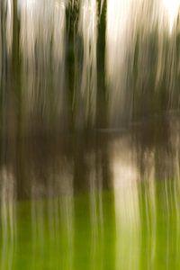 Bomen in het water_02