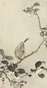Bunting sur la branche fleurie de Ohara Koson