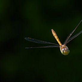 Libelle / Dragonfly sur Henk de Boer