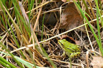 kikker in het grasland von Petra De Jonge