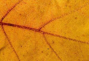 Detail van een herfstblad van