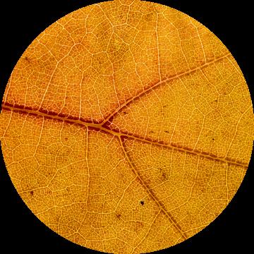 Detail van een herfstblad van Dirk Jan Kralt