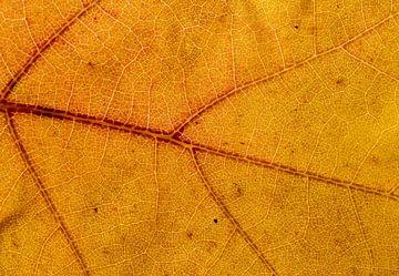 Detail eines Herbstblattes sur Dirk Jan Kralt