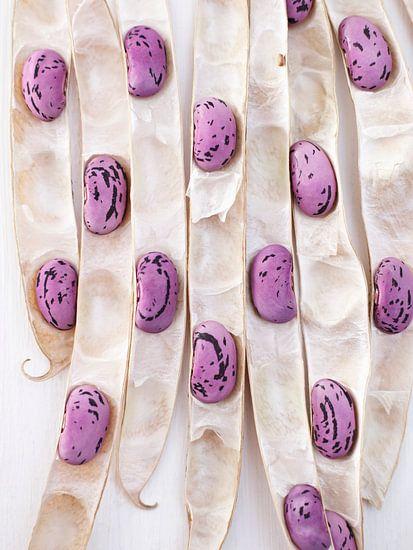 Paarse bonen in hun peulen
