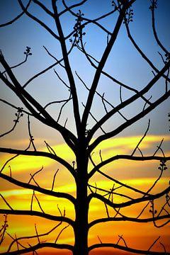 Zonsondergang met silhouet van een boom. van Margreet van Beusichem