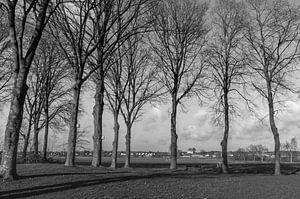 zwart wit bomen, met uitzicht