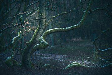 Personages in het bos van Regina Steudte | photoGina