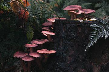 Herbstpilze auf einem Baumstamm von Marjon Boerman