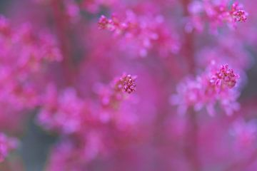 rosa Wolke von Tania Perneel
