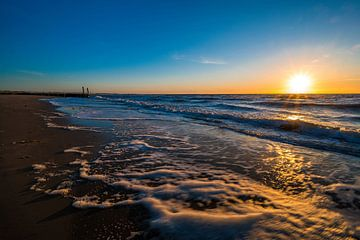 Strandhain von Peter Deschepper